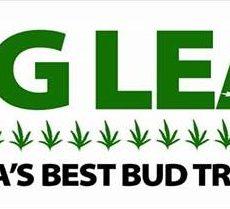 big-leaf-alaska